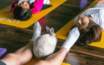 5 Must-Do's for a Sucessful Bunny Yoga